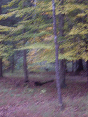There is a Wild Turkey just under the tree in the middle of this picture, but it's hard to see.  He wouldn't wait for me to get my camera ready.