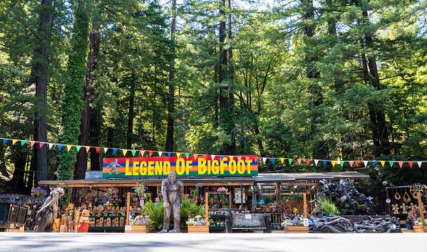 Just outside Humboldt Redwoods