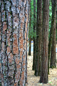 A stand of trees near our campsite. I don't know the name of these trees, but they're all over the Shasta region and have a beautiful orange bark that differentiates them from other trees. On this day, we decided to visit McLoud Falls for the day. We hiked to Middle Falls, drove to Upper Falls (Niko caught a fish), and then stopped to swim in the river just above Lower Falls.