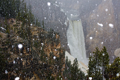 June snow Lower Falls Yellowstone.