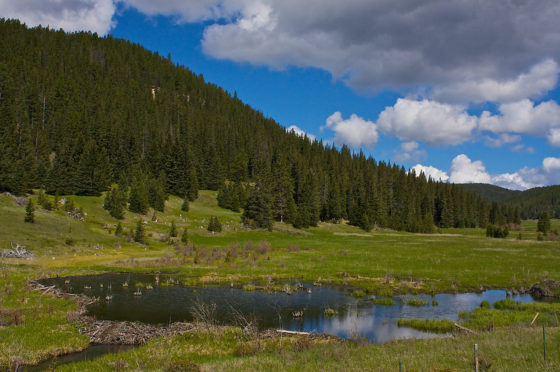Beaver Pond... Black Hills National Forest
