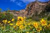 Flowers in Tensleeps Canyon.