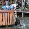 Road Trip - Day Two at Gatorland