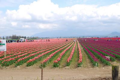 09, April 25:  Tulip Festival