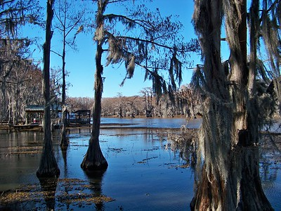 Caddo Lake February 2013
