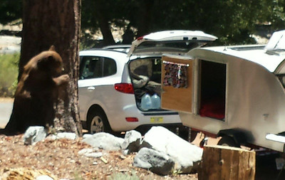 We were still setting up camp when this bear showed up! Totally caught us by surprise!