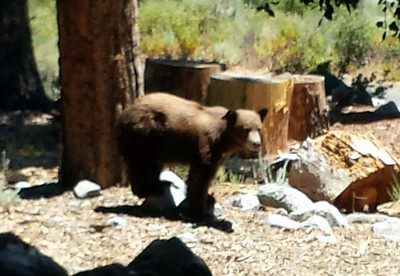 About an hour after we got there this bear came strolling into our camp!