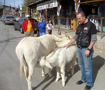 Matt petting some donkeys