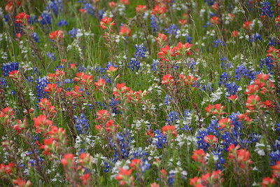 Ennis Bluebonnet Trails Festival 4-16-16