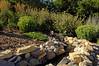 Morgan Creek Vineyard