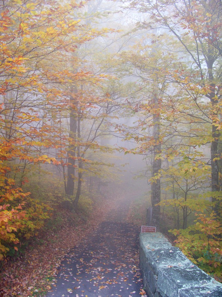 This turned out to be one of our favorite memories of the trip. A foggy walk in the woods.