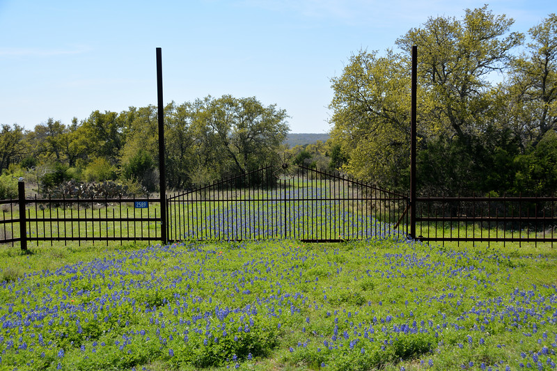 Texas Hill Country Spring 2016