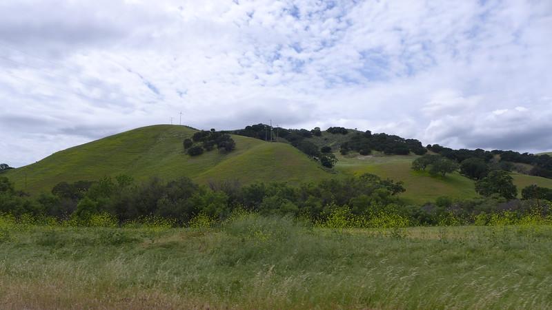 Green hills along the 101, 2016