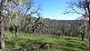 Hike at Montini Open Space Preserve, Sonoma, 2014.