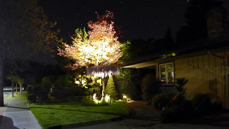 Mom's front yard at night, April 2016.