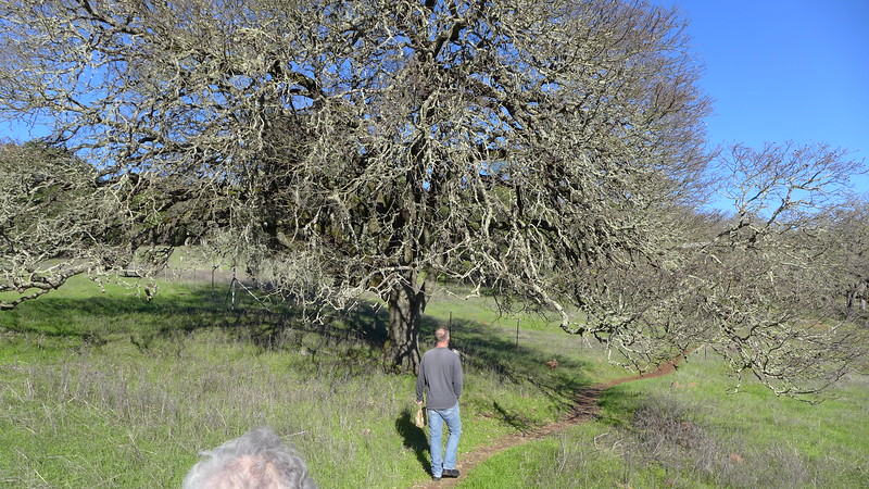 Hike at Montini Open Space Preserve, Sonoma, 2014.