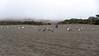 Wright's Beach, Sonoma Coast State Park, 2015.