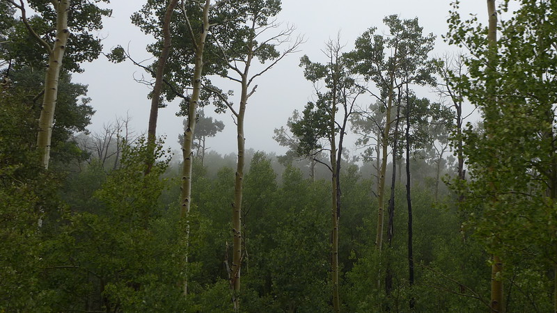 Cottonwood forests near Lower Brown's Reservoir, Utah, 2013.