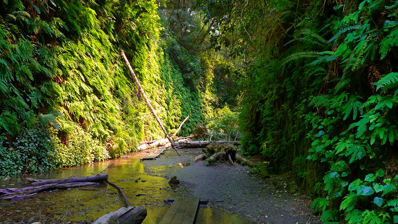 Fern Canyon, Prairie Creek Redwoods State Park, 2015.