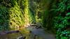 Fern Canyon, Prairie Creek Redwoods State Park, 2015.