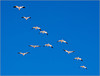 Geese in Formation by Mary Lou Frost