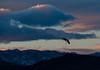 Crane at dusk, by Karen Peterson