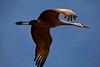 big bird photo by jerry fleury.jpg