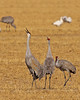 Cranes Mating Song by Mary Lundeberg .jpg