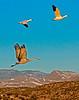 Flying Crane & Geese by R.J Osborn