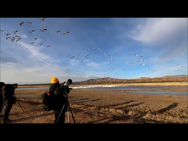 Bosque 0022 video by Robert Winslow (2)