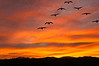 V Shape Flight at Sunset by Gretchen Ainsworth