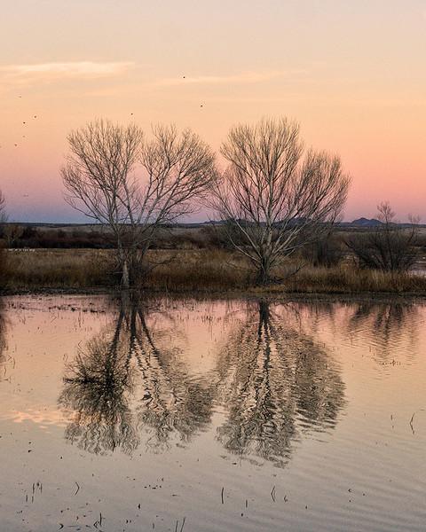 Sunset on the Trees Day Three - Wayne Benoit