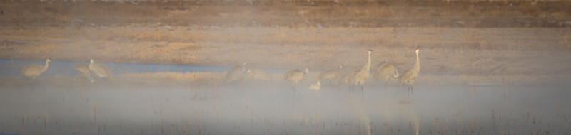 Sand Hill Cranes in Morning Mist, Photo by Harry Wang