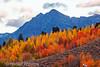 Fall Colors, Grand Teton National Park, Wyoming, USA, North America
