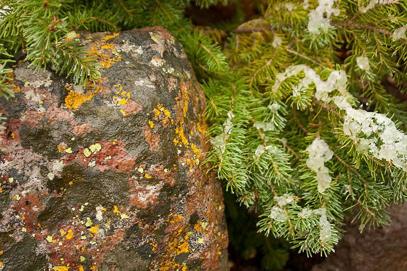 Lichen Color by Ellen Weinberg