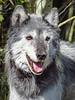 Wolf1 by Carol West