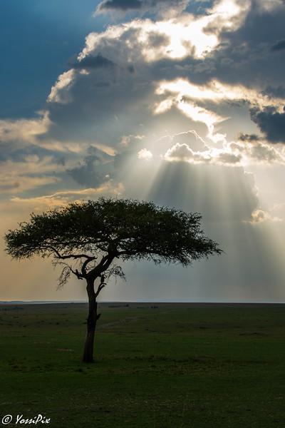 Sun thru clouds in Masa Marai-Joe Salatiel