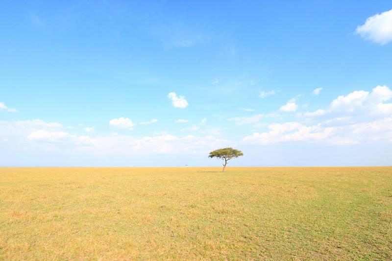 Masai Mara landscape.  Photo by Leah Bensen