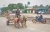Donkey cart on road to Lake Nakuru by Joe Saltiel.