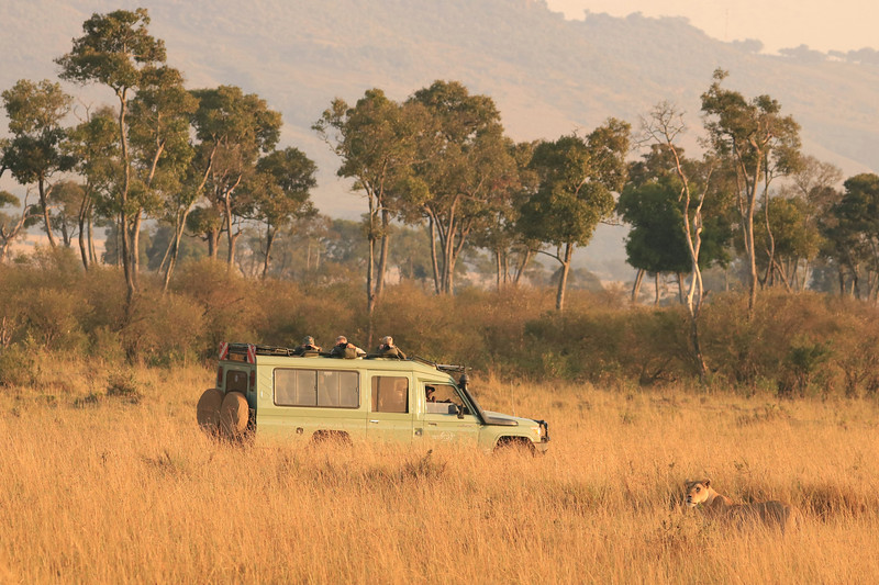 One of our jeeps taking pictures of a lion. This is how we spent our days in the game reserves - six hours in the jeep every morning, break at midday and then back in the jeep for two hours in the evening. What was so great was that we were purposely paired up with different drivers and jeep-mates every day. Then our three jeeps took off in different directions, only converging when something special was spotted. That way we got to know everyone and had different stories and pictures to show each other at night. Photo by Leah Bensen