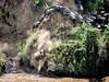 Wilderbeest crossing the mara river- Joe Saltiel
