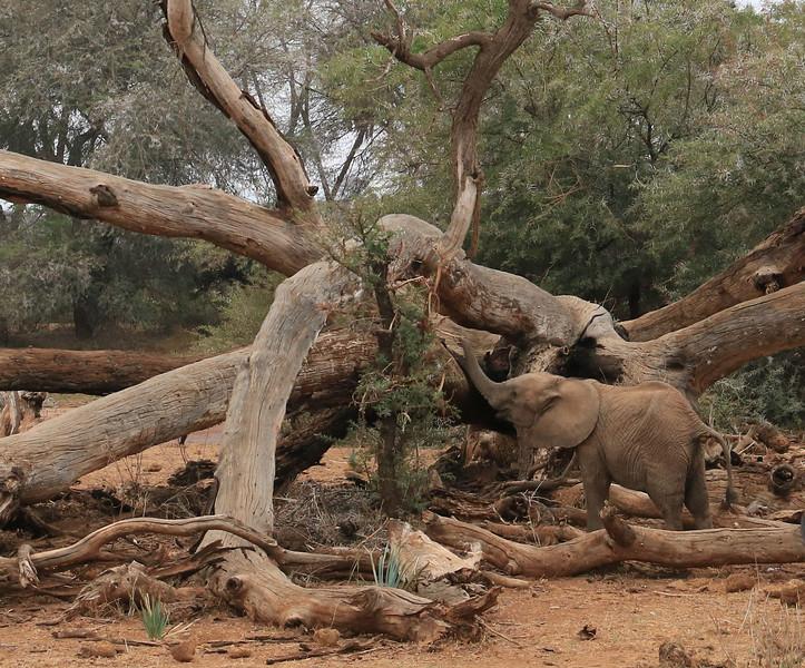 Baby elephant in Samburu National Reserve.  Photo by Leah Bensen