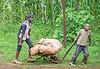 Boys working pushing and pulling cartwheel on the road to Lake Nakuru. Photo by Joe Saltiel