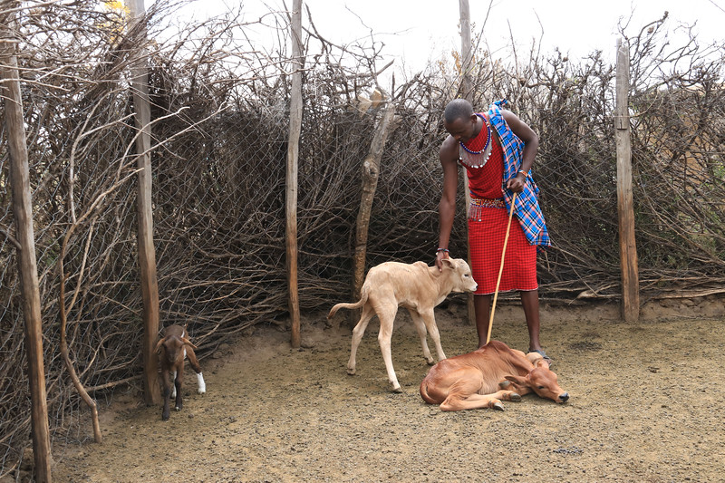 This pen held the baby animals of the Masai village. It had to be constructed high enough and with enough prickly branches around it to discourage predators.  Photo by Leah Bensen