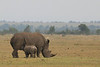 Like other countries in Africa, Kenya struggles to protect rhinos because rhino horn is worth more per ounce than gold due to the demand from China.  They believe the horn is an aphrodisiac so rhinos are hunted and killed just to cut off the horn.  I was surprised to find out that the horns are not made of bone - they are compacted hair and will grow back over time if cut off.  Photo by Leah Bensen