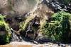 Wilderbeests crossing the mara river-Joe Saltiel