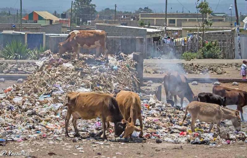 cows donkey on top of garbage, road to Samburu by Joe Saltiel.
