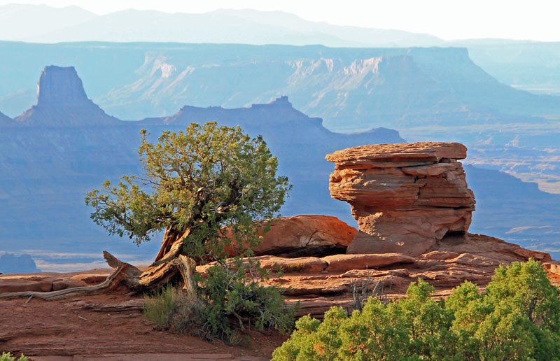 Tree and Rock Over Canyon by Judy Fettman