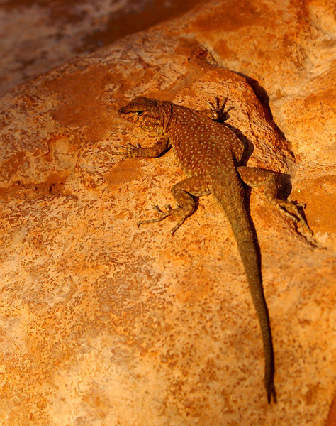 Collard Lizard by Dave Milne