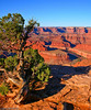 Colorado River from Dead Horse Point... Ron Hagedorn